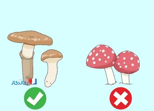 چگونگی تشخیص قارچ سمی