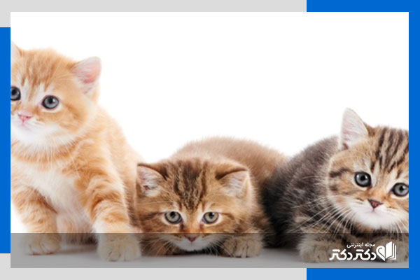 مزایای نگهداری از گربه ؛ دلایل علمی فواید نگهداری از گربهها