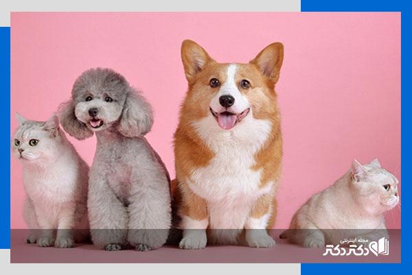 مزایای نگهداری از حیوانات خانگی ؛ چرا نگهداری از حیوانات به شما انرژی مثبت میدهد؟