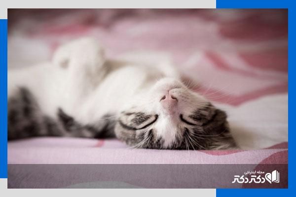 مضررات خوابیدن سگ و گربه کنار انسان