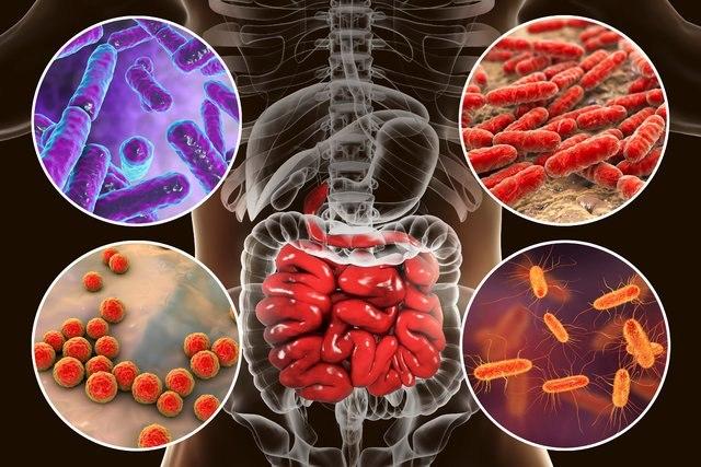 در مورد پیوند مدفوع چه می دانید؟ باکتری ها می توانند جان شما را نجات دهند!